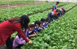 Học sinh tham quan mô hình trồng rau hữu cơ tại trang trại HDGreen  Hải Dương